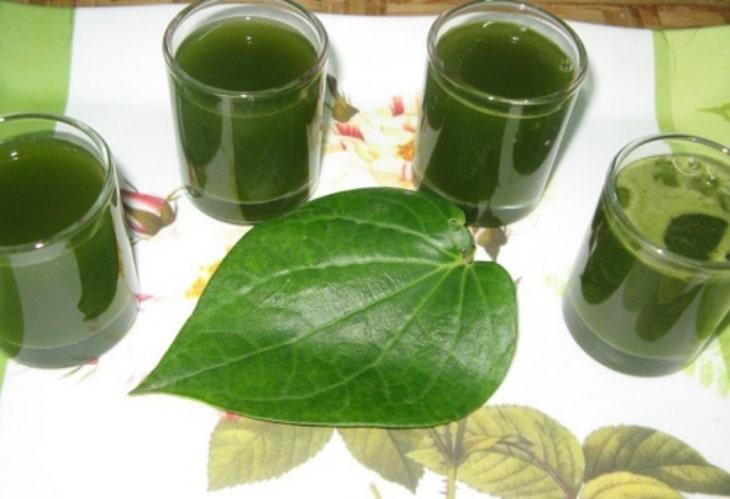Nước cốt lá trầu không tuy có vị hơi khó uống nhưng sẽ giúp cải thiện tốt triệu chứng viêm da cơ địa