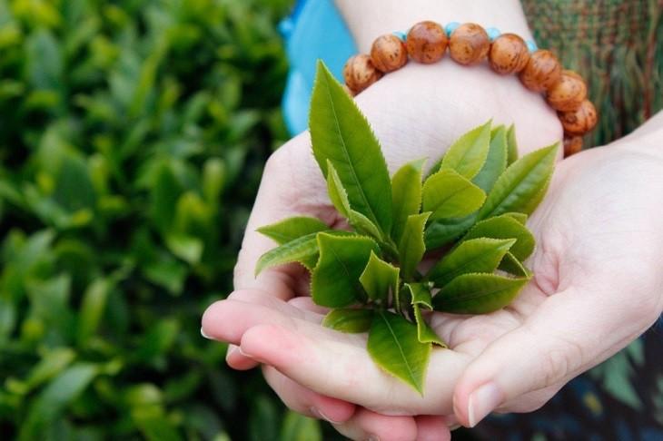 Trà xanh giúp kháng khuẩn, tiêu viêm, ngăn chặn nguy cơ bội nhiễm và giúp da mịn màng