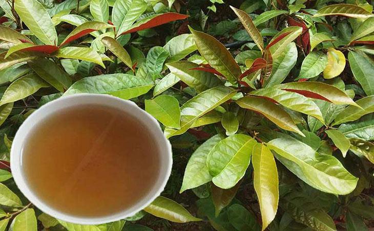 Bài thuốc sao vàng lá cây đơn đỏ sẽ giúp bạn giảm thiểu các triệu chứng ngứa rát, khó chịu