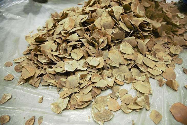 Dân gian thường kết hợp các loại thảo dược quý cùng vảy trút chữa mề đay tại nhà