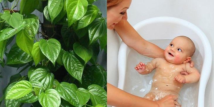 Các mẹ nên thử trị chàm bằng lá trầu không lên những vùng da ít nhạy cảm của bé trước