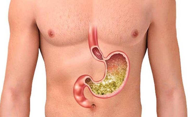 Vị trí của dạ dày trong cơ thể con người