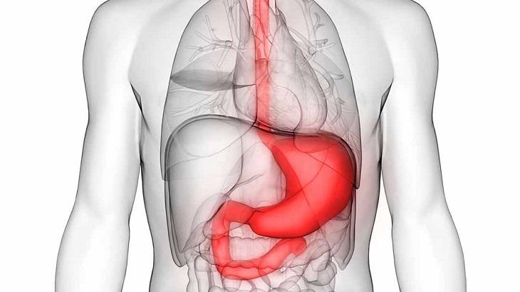Dạ dày nằm phía bên trái trong ổ bụng con người