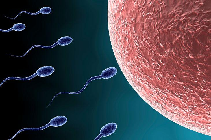 Xuất tinh sớm tinh trùng có yếu không là băn khoăn của nhiều người bệnh
