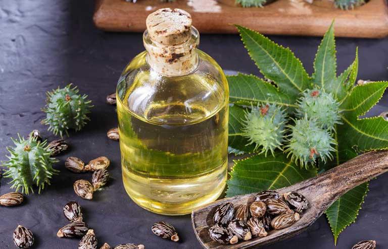 cây thầu dầu tía có uống được không