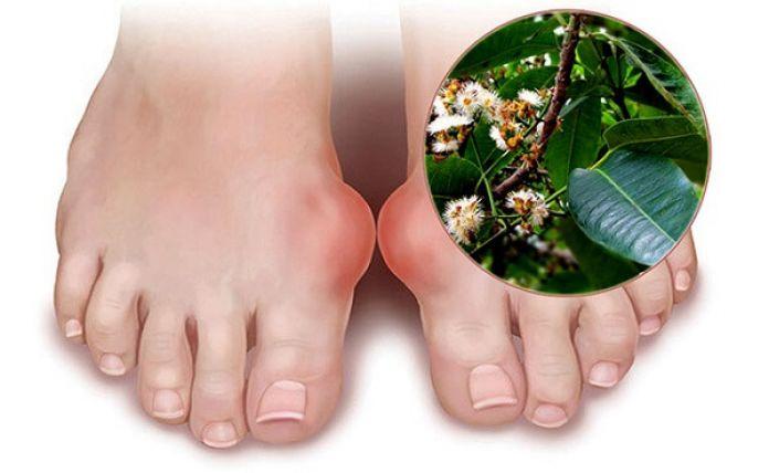 Sử dụng lá vối để chữa bệnh gout được khá an toàn và lành tính đối với cơ thể