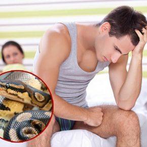 Tác dụng của thịt trăn là gì? Ăn thịt trăn bị liệt dương phải không?