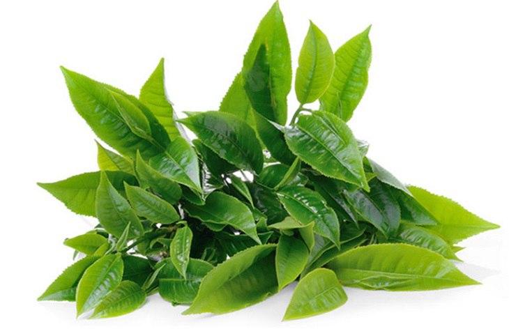 Lá trà xanh có chứa chất chống viêm, giúp người bệnh giảm nhanh tình trạng ngứa ngáy do viêm nhiễm