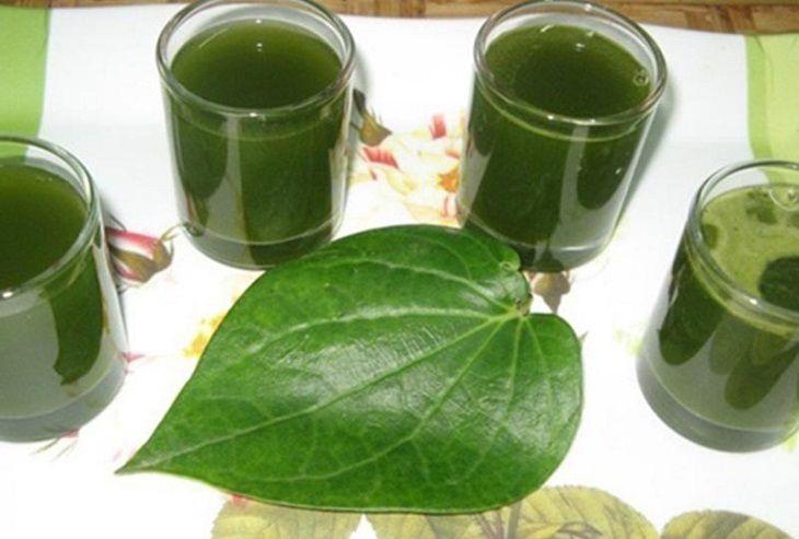 Uống nước lá lốt là cách chữa á sừng hiệu quả từ bên trong
