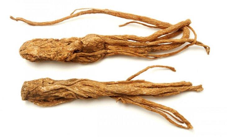 Đương quy là loại thảo dược quí trong điều trị các bệnh phụ khoa