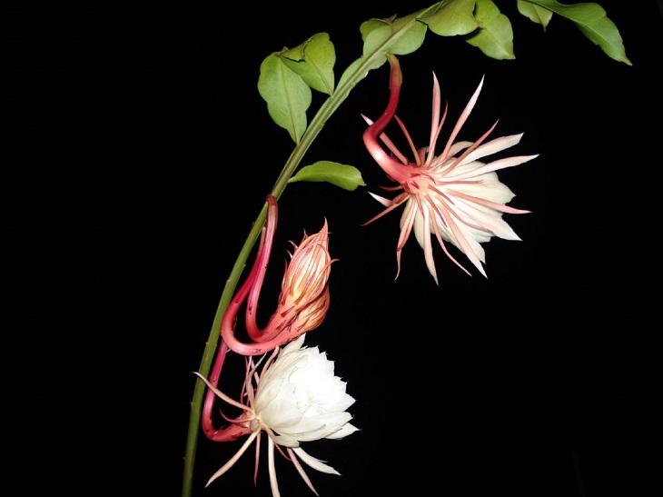 Nước ion kiềm lần đầu tiên được phát hiện khi tiến sĩ nghiên cứu về cơ chế nụ nở thành hoa