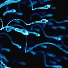 Tinh trùng yếu nên ăn gì và kiêng gì để thụ thai nhanh?