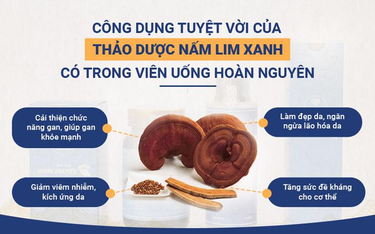 Nấm lim xanh là vị thảo dược được đánh giá cao trong Bộ sản phẩm Mụn trứng cá Hoàn Nguyên