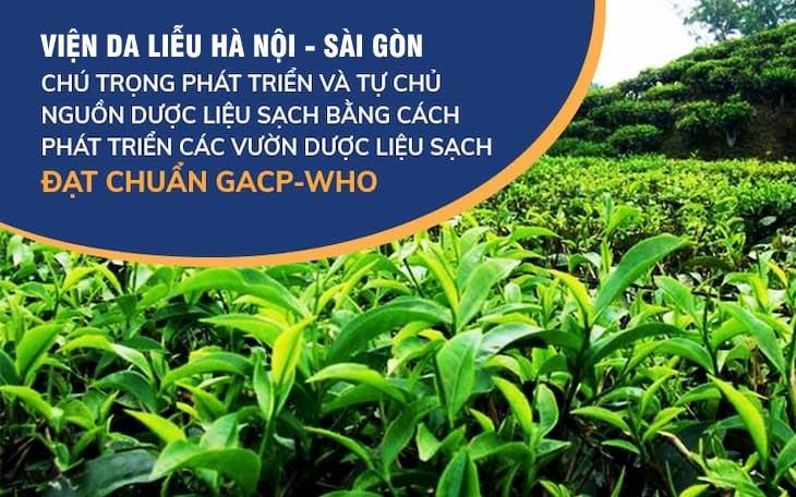 Các thảo dược có trong Hoàn Nguyên đều được thu hái từ vườn chuyên canh đạt tiêu chuẩn GACP-WHO