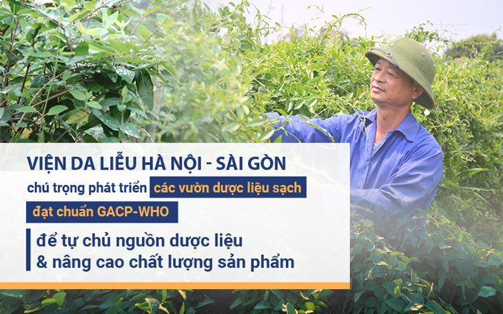 Viện Da liễu Hà Nội - Sài Gòn chú trọng các vườn dược liệu sạch để chủ động nguồn dược liệu sạch dùng trong sản xuất