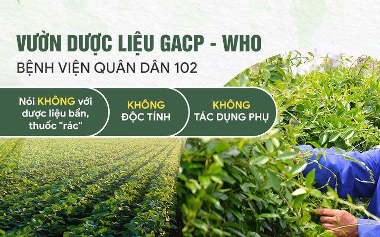 Vườn dược liệu đạt chuẩn GACP - WHO Quân Dân 102