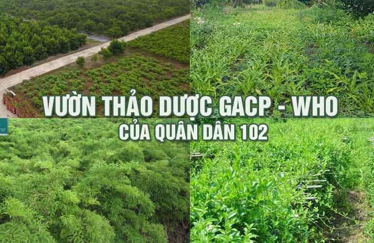 Vườn dược liệu tiêu chuẩn GACP-WHO do Quân dân 102 xây dựng và phát triển