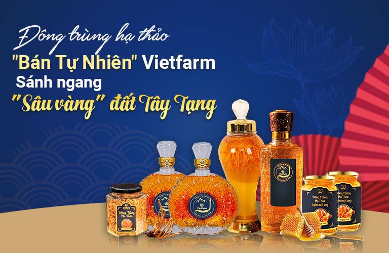 Đông trùng hạ thảo Vietfarm chất lượng tương đương đông trùng hạ thảo tự nhiên Tây Tạng