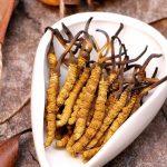 Đông trùng hạ thảo Tây Tạng đắt đỏ - Công dụng, cách sử dụng và giá bán mới nhất hiện nay