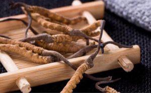 Khi sử dụng đúng cách đông trùng hạ thảo có thể mang đến rất nhiều lợi ích cho sức khỏe
