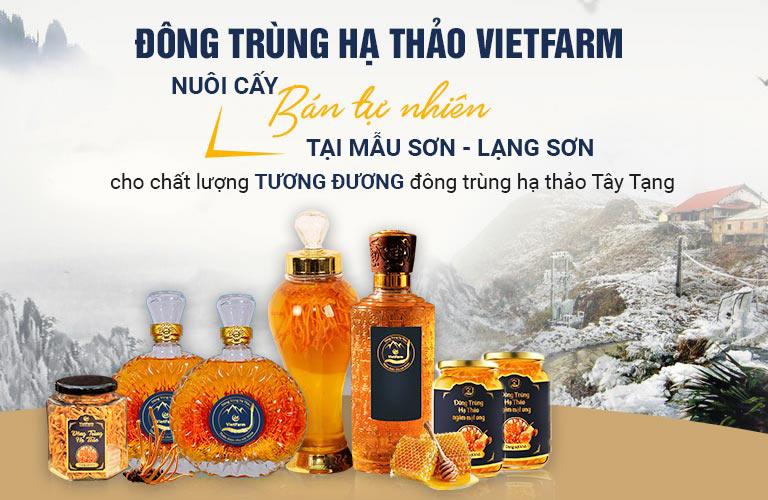 Vùng nuôi trồng đông trùng hạ thảo bán tự nhiên Vietfarm tại núi Mẫu Sơn - Lạng Sơn khí hậu tương đương cao nguyên Tây Tạng