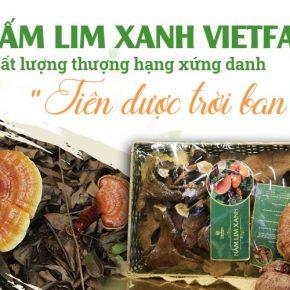 Nấm lim xanh Vietfarm - Chất lượng thượng hạng, dược tính cao