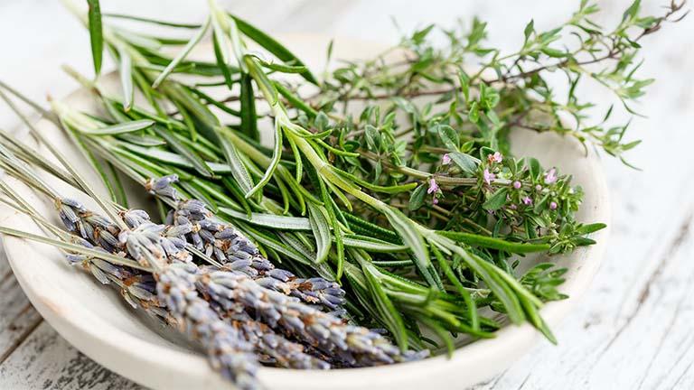 Sử dụng các loại thảo dược tự nhiên có đặc tính kháng viêm và giảm đau để trị gai cột sống tại nhà