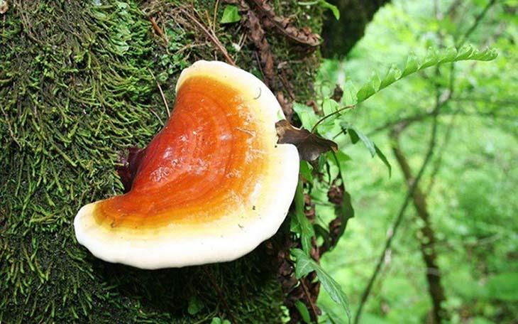 Trong nấm chứa nhiều dưỡng chất, nguyên tố khoáng tốt cho sức khỏe