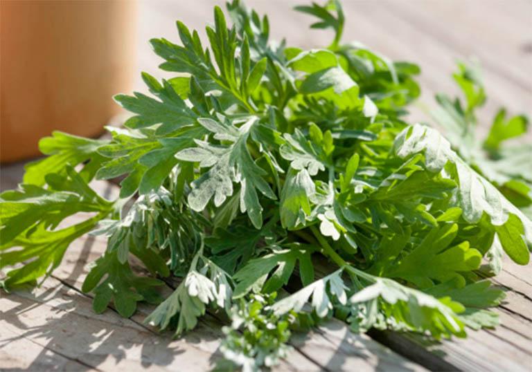 Tận dụng cây ngải cứu bên trong vườn nhà để điều trị bệnh viêm khớp dạng thấp