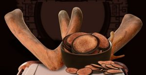 Người dùng cần sử dụng nhung hương đúng cách và đúng liều lượng