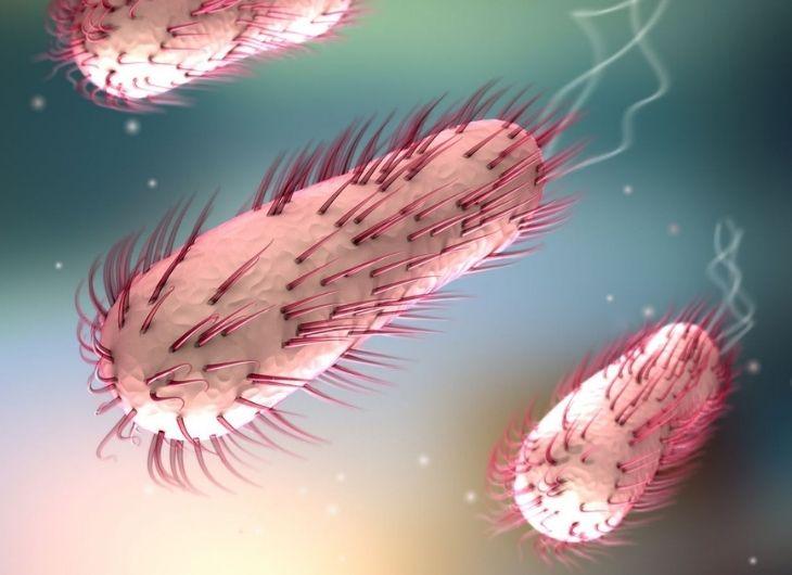 Vi khuẩn E.coli là một trong những nguyên nhân gây viêm nhiễm